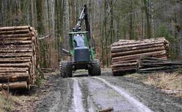 Im Seulingswald wird aufgeräumt: Windwurfholz aus Revieren geholt