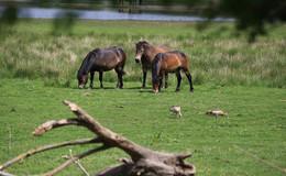 Naturschutzgebiet Rhäden: Ein Hotspot für alle Naturfreunde