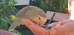 Wer vermisst seinen Piepmatz? Vogel in Kleingartenanlage gefunden