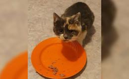 Kastration verwilderter Hauskatzen: Grebenhain und Fulda traurige Spitzenreiter