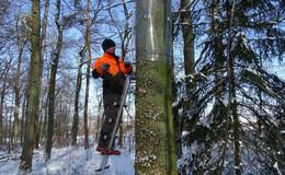 Mit dem Frühling kommt die Brutzeit – Hilfe für Rotmilan, Grauspecht und Co.