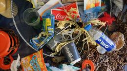 Müll illegal im Wald entsorgt: 10.500 Euro Bußgeld für Ehepaar