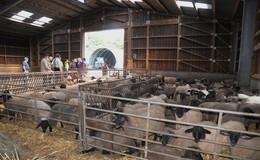 Fachexkursion der Akteure aus Schafzucht und Landschaftspflege
