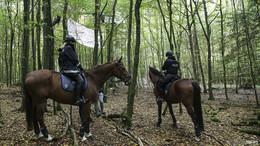 Friedlicher Protest: Umweltaktivisten besetzen Dannenröder Wald