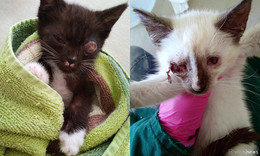 An alle Katzenfreunde: Masha und Finchen suchen ein neues Zuhause