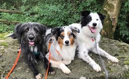 So viele schöne Hunde in Osthessen - Leserbilder (3) zum Welthundetag