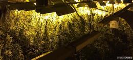 Schlag gegen Drogenkriminelle - Indoorplantagen mit 5.000 Pflanzen ausgehoben