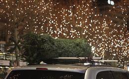Weihnachtsbaumtransport - so kommt der Baum ungerupft nach Hause