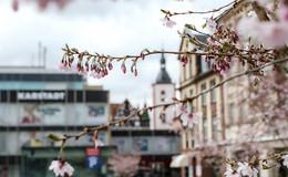 Es ist trotzdem Frühling - Impressionen aus der Innenstadt