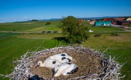 Möblierte Wohnung für Adebar: 20 Brutpaare im Landkreis eingenistet