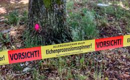 Eichenprozessionsspinner: Bäume im Stadtgebiet von Bebra befallen