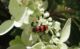 Bienenkäfer, Fingerhut, Schmetterlinge und bunte Blütenvielfalt in Waldhessen