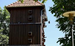 Diesmal ging es glimpflich aus: Nur 265 Euro Bußgeld für Taubenfütterung