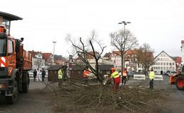 Ersatz für Lolls-Linden: Rund um den Marktplatz soll es grüner werden