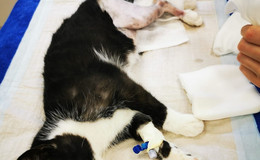 Herrenlos und in Not - Katerchen Mogli sucht Paten für seine Beinbruch-OP
