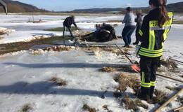 Pferd bricht im Eis ein und wird gerettet - Ein Helfer wird dabei verletzt