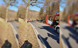 Pferd stürzt in einen Bachlauf und muss von Feuerwehr gerettet werden