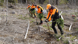 Vielfältiger Wald soll entstehen: Baumpflanzaktion als Initialzündung für Zukunft