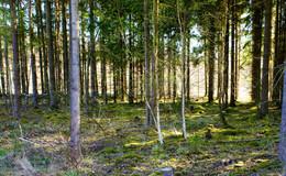 Frühling und Sonne sei Dank: der Wald wird endlich grün