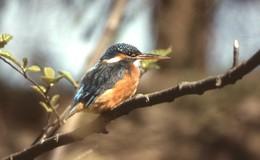 Am Aueweiher: Biodiversitätsschaden durch Vorarbeiten eingetreten