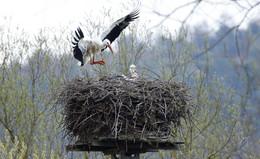 Ein Paradies für alle Wasservögel, Amphibien und zwei Storchenpaare