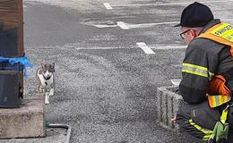 Feuerwehr rettet Katze von geschlossenem Parkdeck