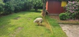 Tierischer Einsatz: Feuerwehr rettet hilfloses Schaf