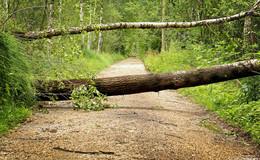 Sabine kommt: Schicken Sie uns Ihre Sturmvideos und Unwetterbilder