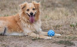 Zum Welthundetag: Ein Hoch auf die bellenden, schwanzwedelnden Vierbeiner!
