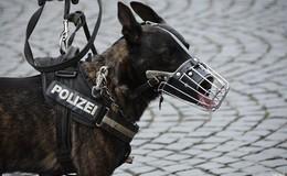 Diebe zu laut: Polizeihund Cisco schnappt Einbrecher