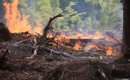 Warnung: Aktuell überwiegend mittlere Waldbrandgefahr