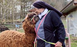 Tierische Therapie: In Lamahausen kann jeder sein, wie er ist!