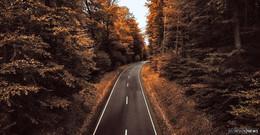 110 neue Bäumen an verschiedenen Straßen im Vogelsberg