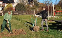 Baumpflanzaktion im Rahmen des Klimaschutzprogrammes des Landes