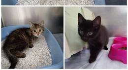 Zwei Katzenkinder auf Rastplatz ausgesetzt: Karton durch Zufall entdeckt