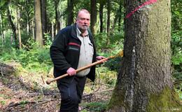 Dramatische Situation: Dürre und Käfer setzten Bäumen zu - Lebensgefahr