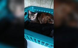 Seit Sonntag von Besitzerin vermisst: Wo ist Katze Lilo?
