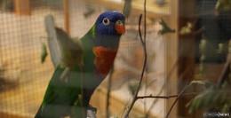 AZ-Landesschau zeigt Vögel aus Region und aller Welt