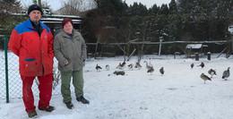 Geflügelpest: Vogelsbergkreis zur Einschläferung der gefiederten Tiere