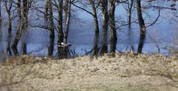 Wenn Störche klappern, Vögel balzen und Nilgänse ein Vollbad nehmen