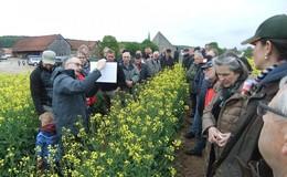 Qualitativ hochwertiger Honig durch Rapsanbau - Imker und Landwirte im Dialog