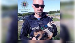 Tierischer Blaulichteinsatz: Polizist befreit Fuchswelpen aus Stacheldraht