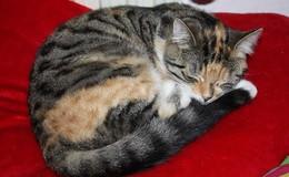 Dreijährige Katze seit Montag in Burghaun vermisst