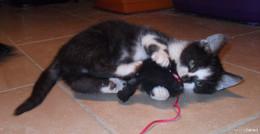 Herrchen und Frauchen gesucht: Verschmuste Katzen hoffen auf neues Zuhause