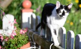 Katzenmädchen seit dem 6. Januar vermisst