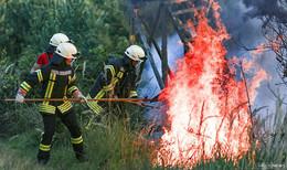 In Hessen: Mittlere bis hohe Waldbrandgefahr am Wochenende