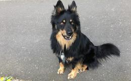 Hund Sam seit Freitag vermisst: Besitzer bitten um Hinweise