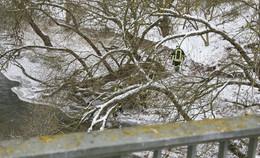 Feuerwehrkräfte befreien Kanadagans aus Eis am Ufer der Fulda