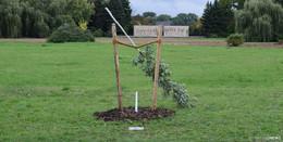 Gedenkbaum in Zwickau für NSU-Opfer Enver Simsek abgesägt