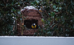 Die richtige Mischung macht's: So helfen wir Vögeln durch den Winter